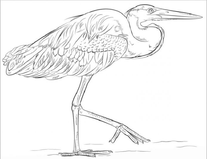 Artistic lesson: how to draw a heron