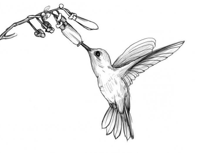 How to draw a hummingbird easily and quickly