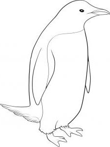 Simple tips on how to draw a penguin in pencil in stages