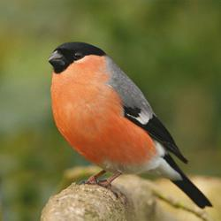 Wildlife: a bird with a red breast